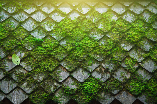 Fern and moss tree on Wooden roof