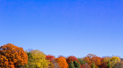 Autumn Trees and Blue Skies