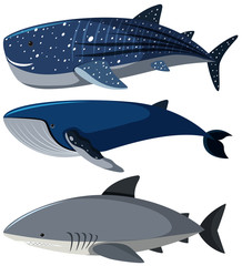 Three different types of sharks