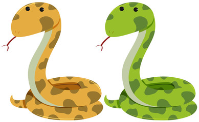 Two rattlesnakes on white background