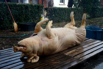 Pig slaughtering ceremony in the Hungarian countryside