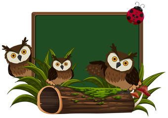 Chalkboard with three owls