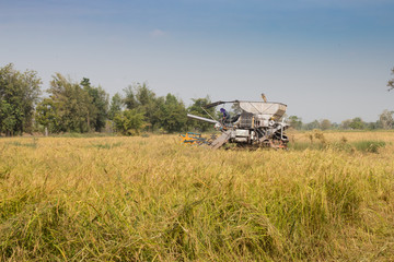 harvester rice machine on rice field, agriculture havester machine