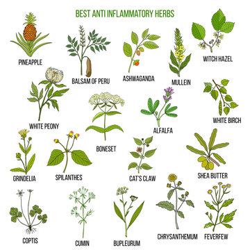 Best anti-inflammatory herbs. Vector set