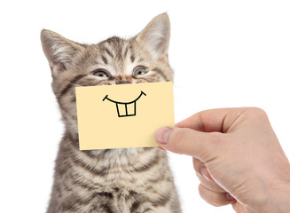 Papier Peint - happy cat with funny smile on cardboard isolated on white