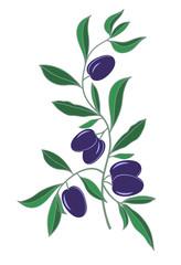 branch of black olives on white background