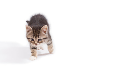 cute little kitten on white background, mock up for text, congratulations, phrases, lettering