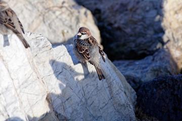 very nice house sparrow