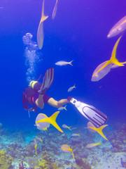 Scuba Diving Bay of Pigs