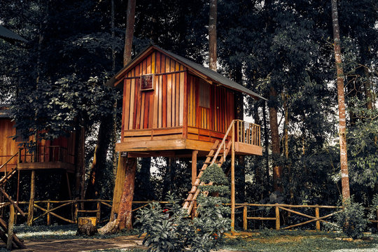 Wooden House on Tree
