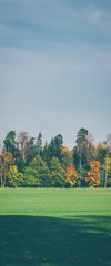 LINE OF TREES - Colorful autumn in the landscape of the natural environment