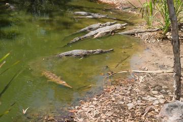 Sonnenbad der Krokodile
