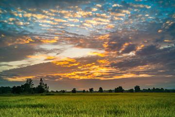Beautiful sunset at the paddy field