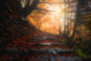 beautiful path in the forest at autumn