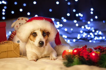 Pet with gift in christmas hat