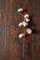 branch with white cotton flowers