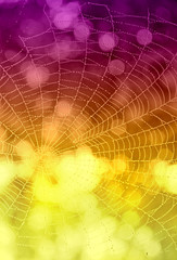 Purple-yellow background with drops of water on a web