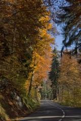 L'automne à Servoz, Haute-Savoie, France