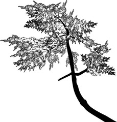 illustration with curved fir outline on white