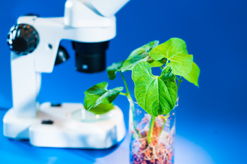 Research of green plant leaves in a scientific laboratory