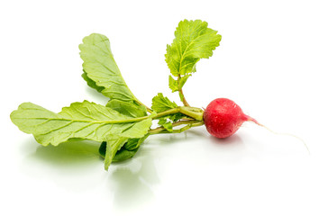 One whole red radish with fresh green leaves isolated on white background.