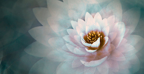 Fotorollo Lotosblume pink lotus flower with a dreamy blue background