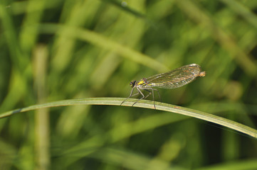 Dragonfly sits on a green plant. Insect, wild nature, animals, fauna, flora, plants, beauty