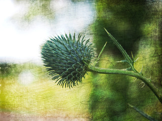 Dekoracyjny kwiatostan ostu na abstrakcyjnym tle