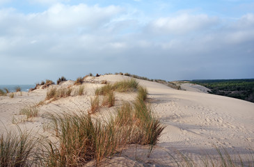 sand dunes and de la coubre forest in Charente maritime coast