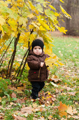 child with a maple leaf