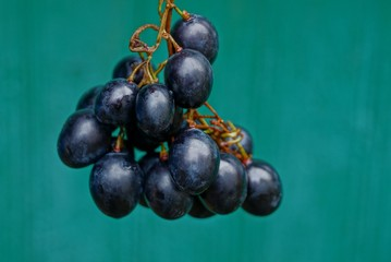 большие спелые ягоды винограда на ветке на зелёном фоне