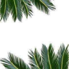 tropical palm sammer frame