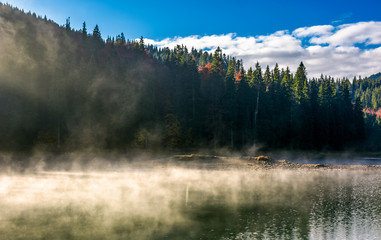 boiling water of lake in spruce forest. beautiful nature background in fine autumn weather