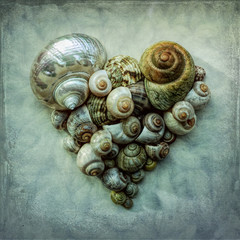 Snail shells, heart-shaped