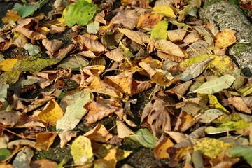 opadłe liście jesienne