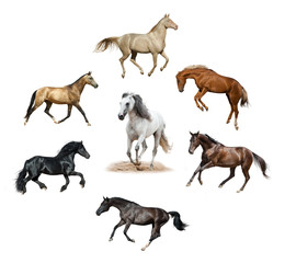 Set of isolated horses