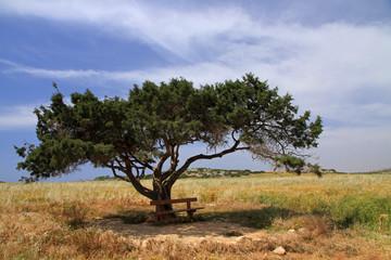 Alone tree, Cyprus