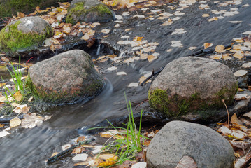 A creek with stones covered with moss and floating leaves