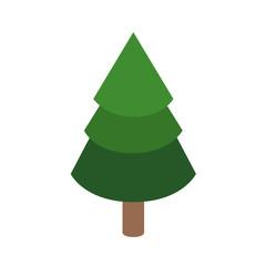 Isolated pine tree design