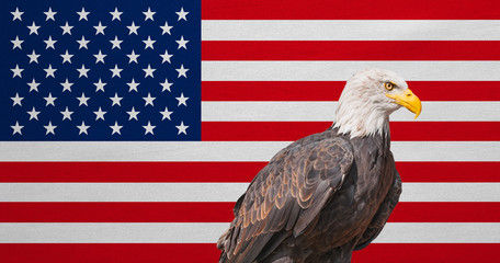 American flag, Bald Eagle, national symbols of USA