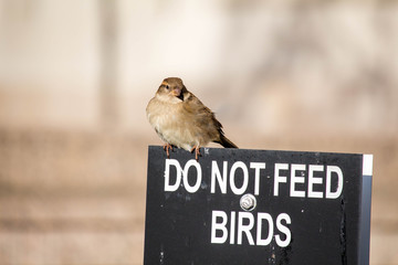 Bird Looking for Food on a Do Not Feed Bird Sign
