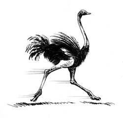 Ink sketch of a running ostrich