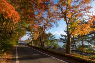 Mt. Fuji in the Momiji tunnel. Fuji mountain at Kawaguchiko lake in afternoon sunshine rise with autumn colorful maple leaf.