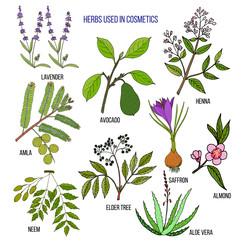 Herbs used in cosmetology
