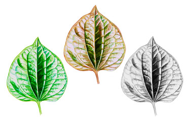 Painting watercolor Tropical Leaves illustration.