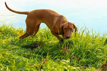 une chienne au bord de la rivière