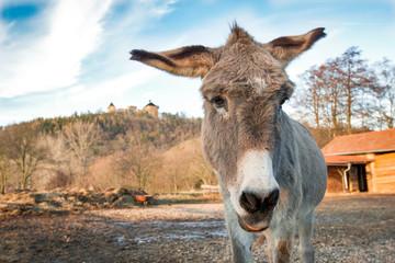 Photo sur Plexiglas Ane Head of a donkey outdoors