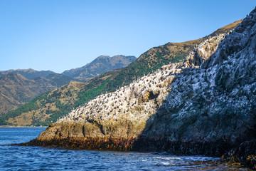 Cormorants on a cliff in Kaikoura Bay