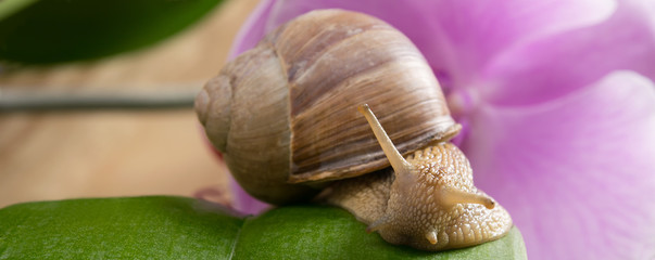 the snail sits on a green leaf, on a background of flowers
