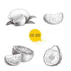 Hand drawn sketch style citrus fruits set. Lemon half, lime, tangerine, mandarin part, oranges and bergamots isolated on white background. Vector organic food illustrations.